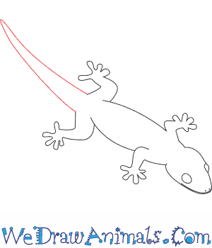 Diagram of a gecko lizard basic guide wiring diagram how to draw a gecko rh wedrawanimals com gecko food chain frog heart diagram ccuart Gallery