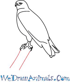 how to draw a hawk  we draw animals
