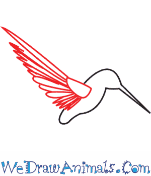 How to Draw a Hummingbird - Quick Step-by-Step Tutorial - Step 4