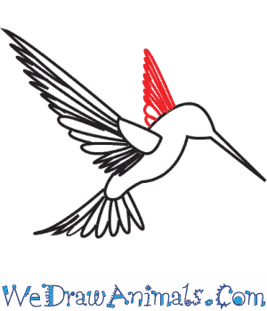 How to Draw a Hummingbird - Quick Step-by-Step Tutorial - Step 6