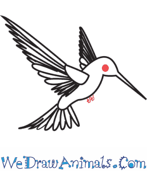 How to Draw a Hummingbird - Quick Step-by-Step Tutorial - Step 7