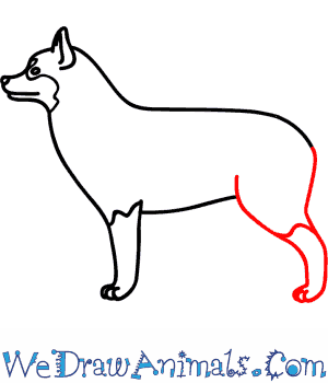 How to Draw a Husky Dog - Quick Step-by-Step Tutorial - Step 5