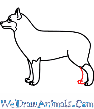 How to Draw a Husky Dog - Quick Step-by-Step Tutorial - Step 7
