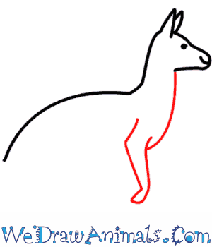 How to Draw a Kangaroo - Quick Step-by-Step Tutorial - Step 4