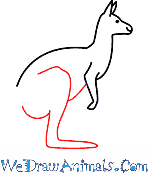 How to Draw a Kangaroo - Quick Step-by-Step Tutorial - Step 5