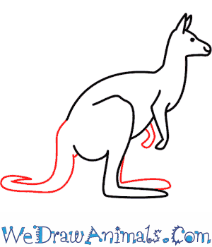How to Draw a Kangaroo - Quick Step-by-Step Tutorial - Step 6