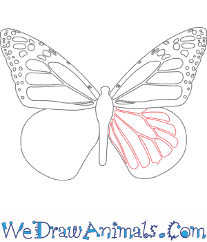 How to Draw a Monarch Butterfly - Quick Step-by-Step Tutorial - Step 8