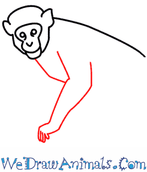 How to Draw a Monkey - Quick Step-by-Step Tutorial - Step 5