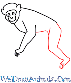 How to Draw a Monkey - Quick Step-by-Step Tutorial - Step 6