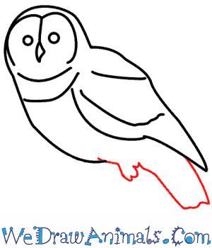 How to Draw an Owl - Quick Step-by-Step Tutorial - Step 6