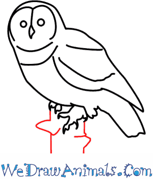 How to Draw an Owl - Quick Step-by-Step Tutorial - Step 8