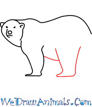 How to Draw a Polar Bear - Quick Step-by-Step Tutorial - Step 7
