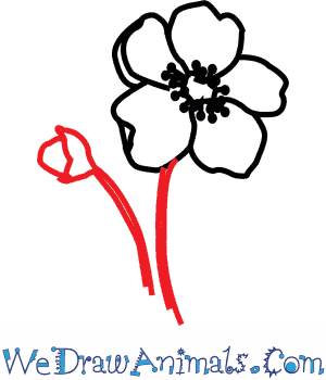 How to draw a poppy flower mightylinksfo