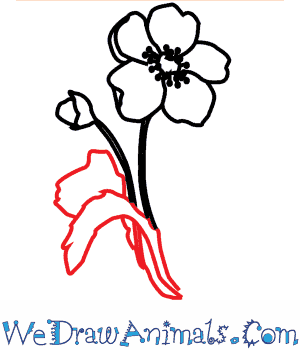 How to draw a poppy flower print tutorial mightylinksfo