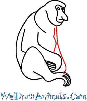 How To Draw A Proboscis Monkey