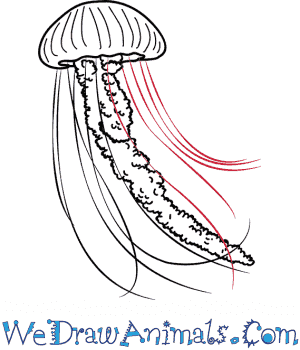 How To Draw A Realistic Jellyfish