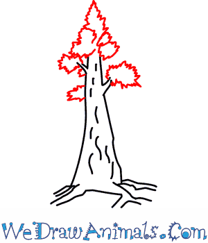 How To Draw A Redwood Tree The first family of redwood trees that we will cover is the largest family, the family cupressaceae. how to draw a redwood tree