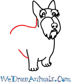 How to Draw a Scottie Dog - Quick Step-by-Step Tutorial - Step 6