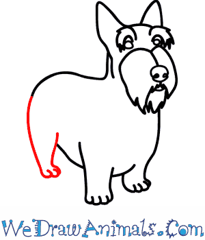 How to Draw a Scottie Dog - Quick Step-by-Step Tutorial - Step 7