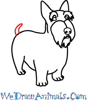 How to Draw a Scottie Dog - Quick Step-by-Step Tutorial - Step 8