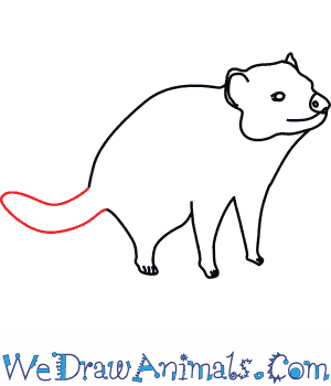 How to Draw a Tasmanian Devil - Quick Step-by-Step Tutorial - Step 7