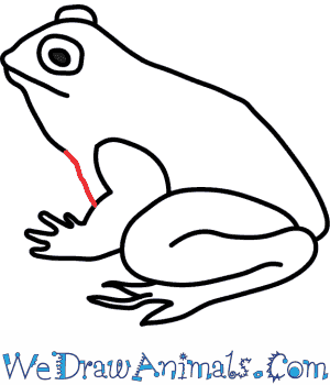 labeled diagram of toad