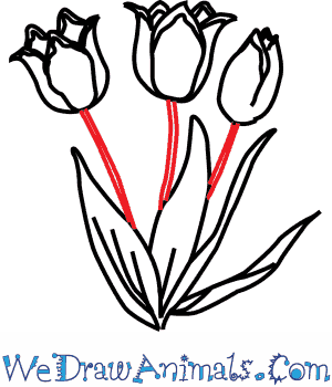 how to draw a tulip flower