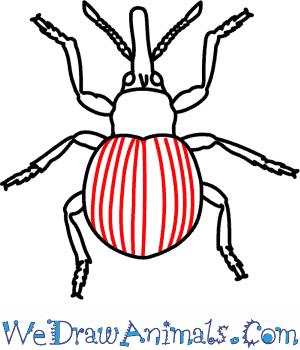 Boll Weevil Drawing