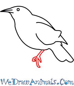 How To Draw A Western Meadowlark