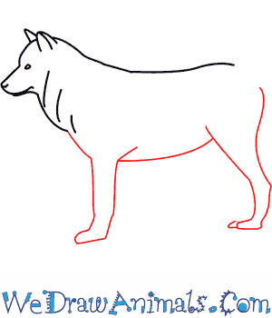 How to Draw a Wolf - Quick Step-by-Step Tutorial - Step 4
