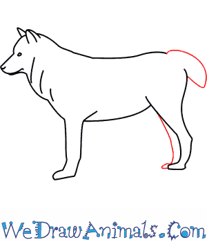 How to Draw a Wolf - Quick Step-by-Step Tutorial - Step 5