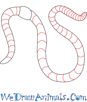 How to draw a worm print tutorial ccuart Choice Image