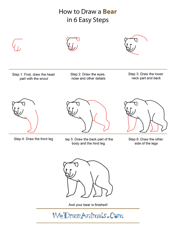 How to Draw A Bear - Quick Step-by-Step Tutorial