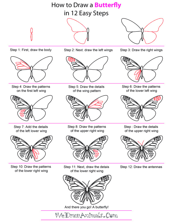 How to Draw A Butterfly - Quick Step-by-Step Tutorial