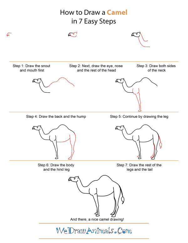 How to Draw A Camel - Quick Step-by-Step Tutorial