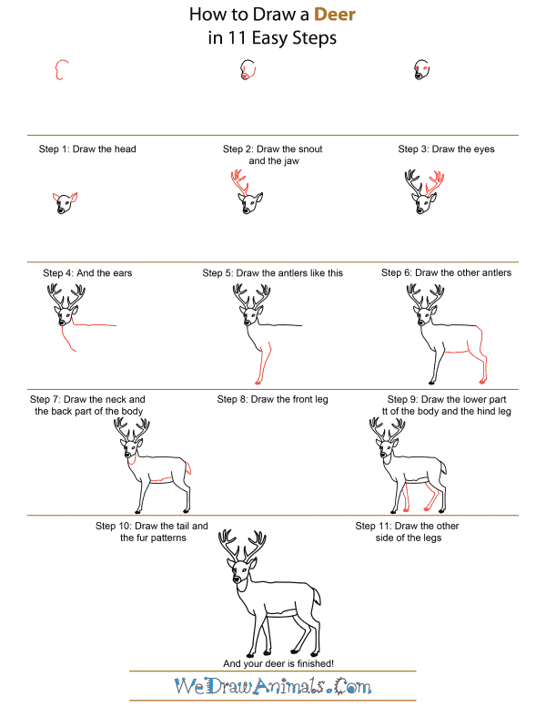 How To Draw Deer Step By Step