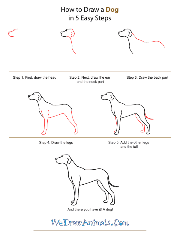 How to Draw A Dog - Quick Step-by-Step Tutorial