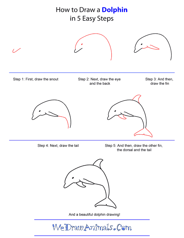 How to Draw A Dolphin - Quick Step-by-Step Tutorial