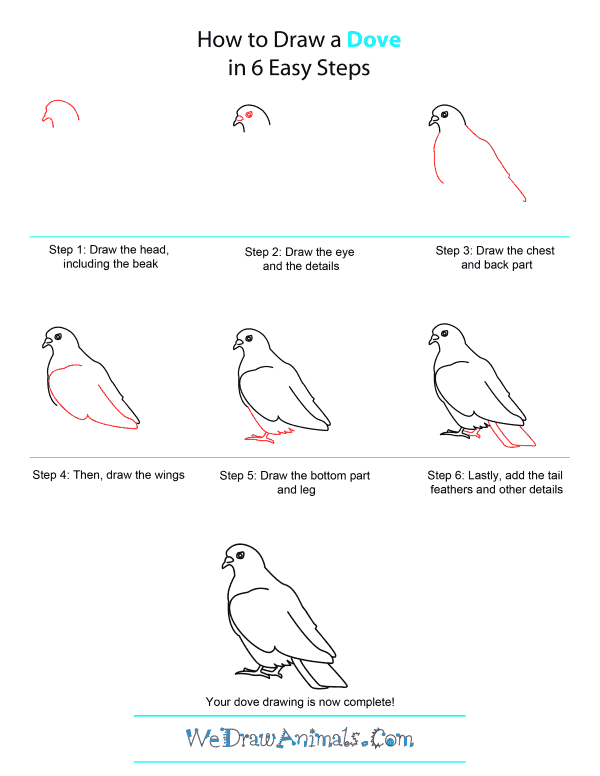 how to draw a dove quick step by step tutorial
