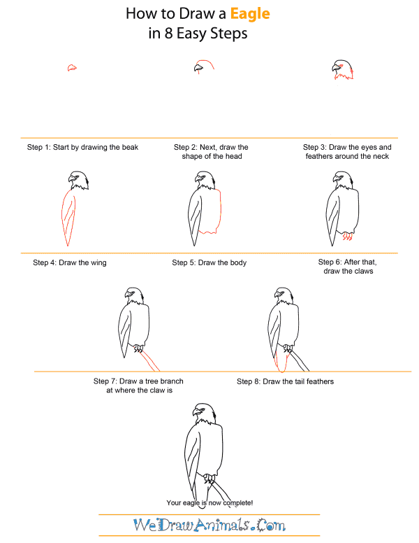 How to Draw An Eagle - Quick Step-by-Step Tutorial
