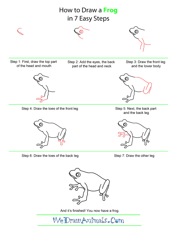 How to Draw A Frog - Quick Step-by-Step Tutorial