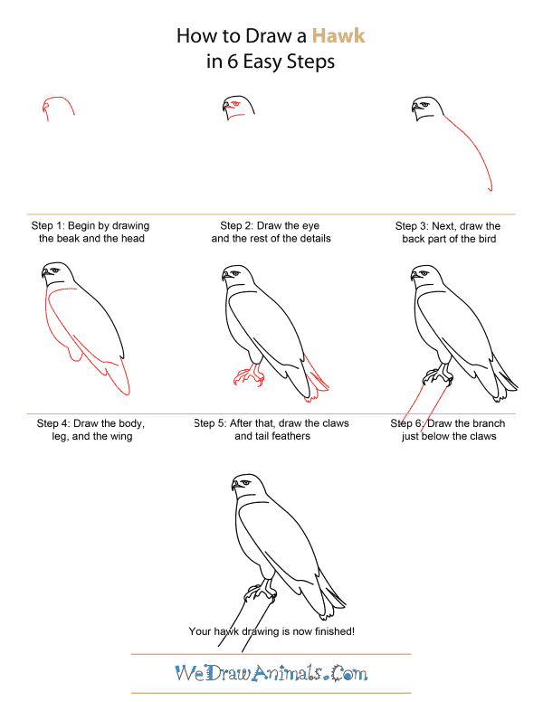 how to draw a hawk quick step by step tutorial