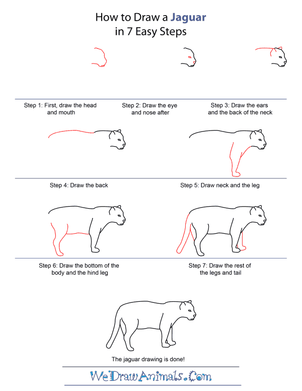 How to draw a jaguar how to draw a jaguar quick step by step tutorial ccuart