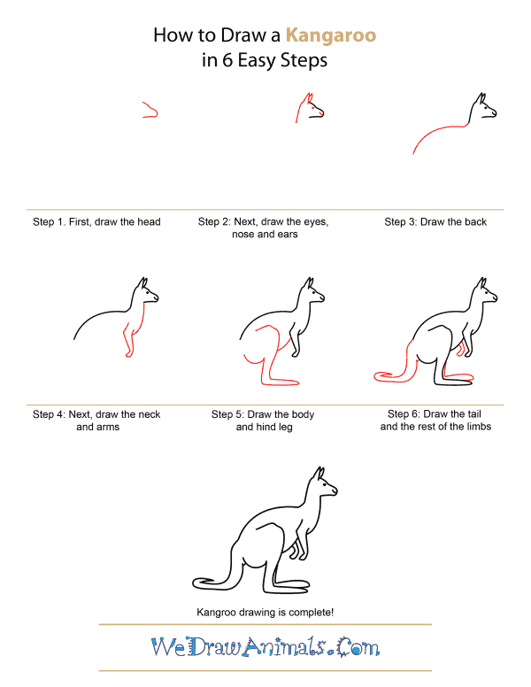 How to Draw A Kangaroo - Quick Step-by-Step Tutorial