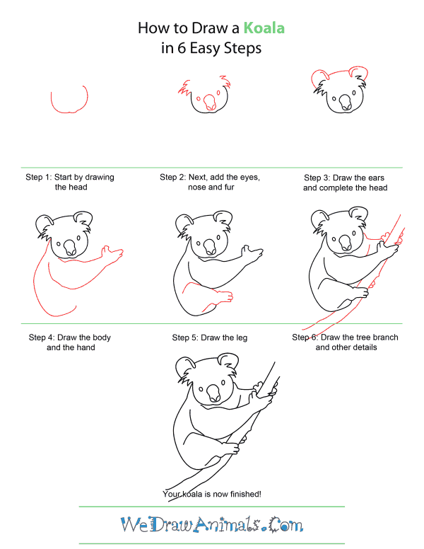 How to Draw A Koala - Quick Step-by-Step Tutorial