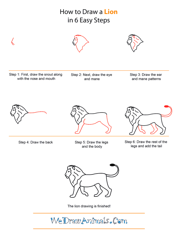 How to Draw A Lion - Quick Step-by-Step Tutorial