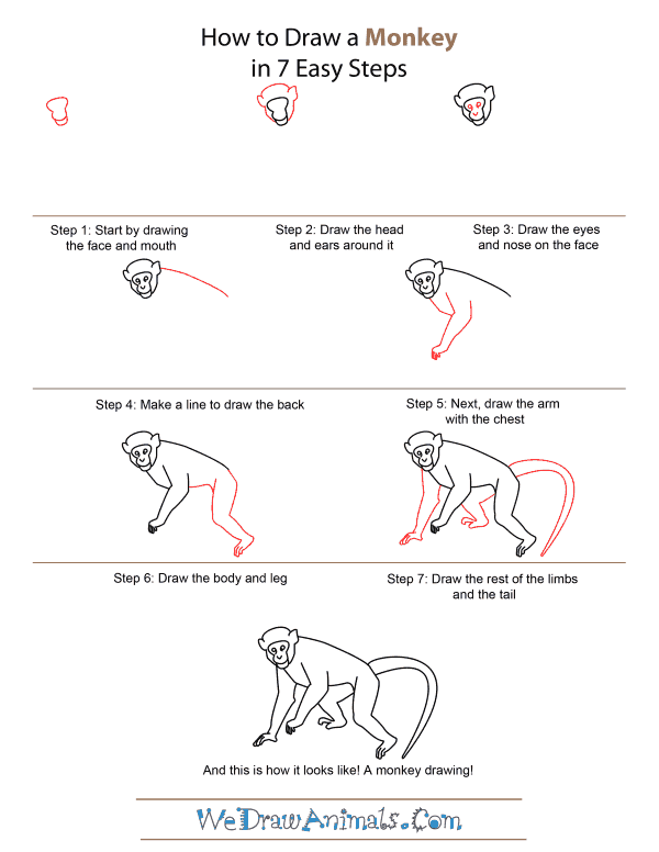 How to Draw A Monkey - Quick Step-by-Step Tutorial