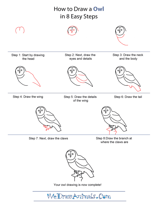 How to Draw An Owl - Quick Step-by-Step Tutorial