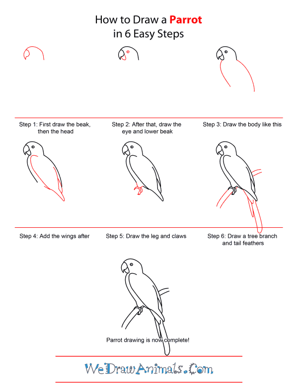 How to Draw A Parrot - Quick Step-by-Step Tutorial