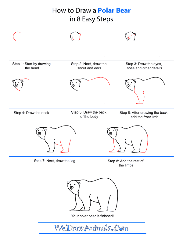 How to Draw A Polar Bear - Quick Step-by-Step Tutorial